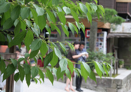 Img_9346a_1