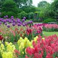 植物園 初夏