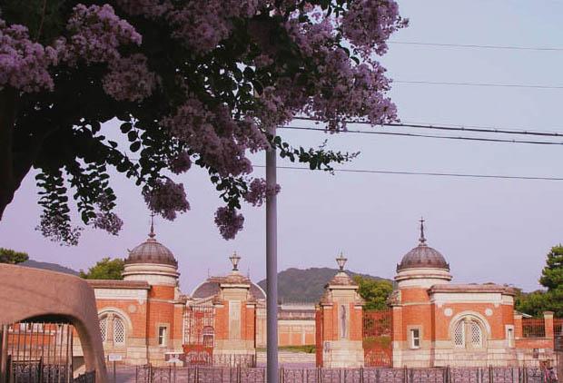 博物館 百日紅