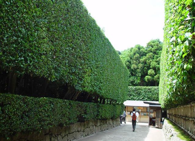 銀閣寺の垣根