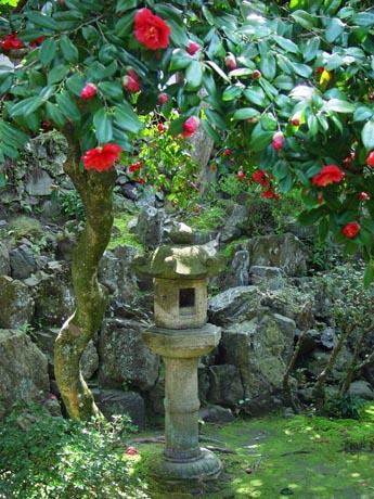 霊鑑寺 椿の寺