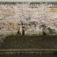 美術館 桜