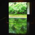 実相院 床緑