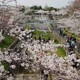 桜 蹴上インクライン