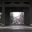 金戒光明寺 散り桜