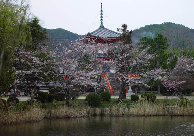 桜 大覚寺 大沢の池