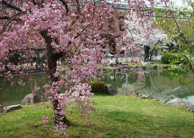 美術館 桜の庭園