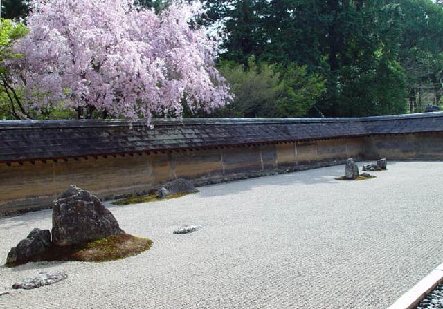 龍安寺 桜