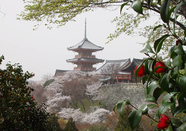 清水寺 桜 三重の塔