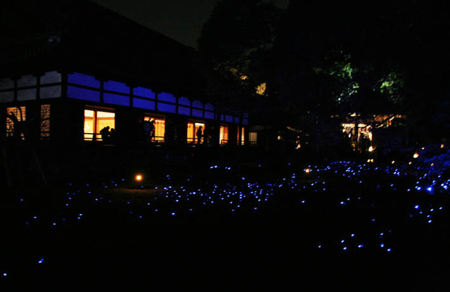 花灯路 2006 青蓮院
