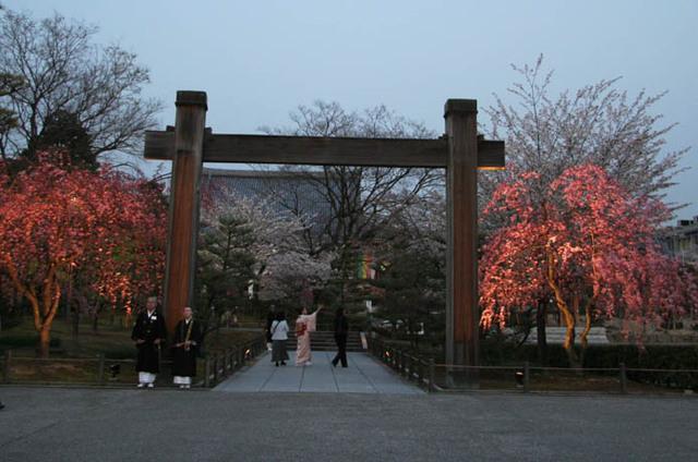 智積院 桜供養